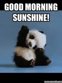 Good Morning Meme Pics - good morning sunshine