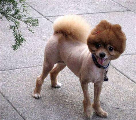 puppy haircut hilarious haircuts 49 pics izismile