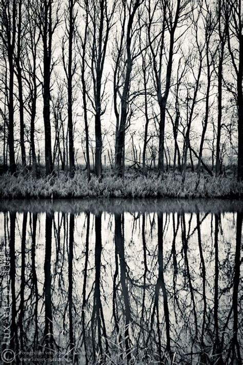 symmetry and pattern photography definition 27 best breadth balance symmetry images on pinterest