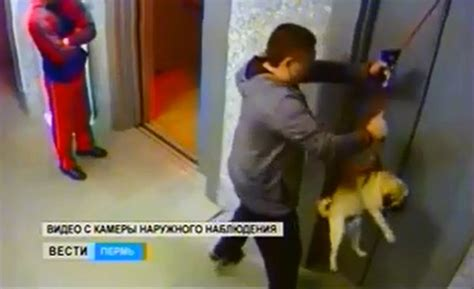 elevator death russian man saves dog from elevator death video