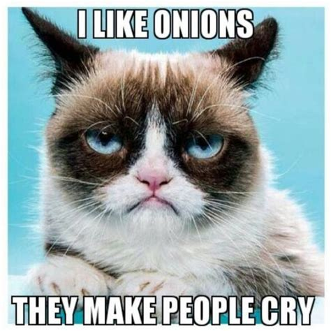 Best Angry Cat Meme - top 40 funny grumpy cat pictures and quotes cats how