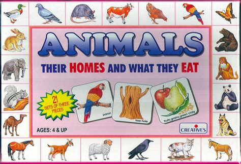 their home brighttomato animal homes and food educational game