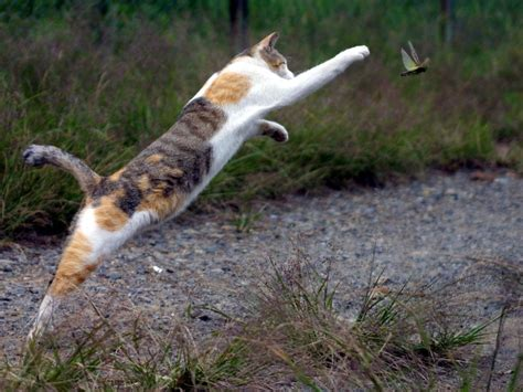 cat chases index of gis animals cats kittens