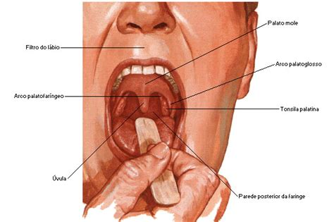 vestibulo biliar aula de anatomia sistema digestrio