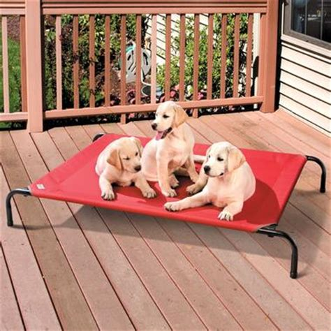 coolaroo elevated pet bed your dog can chill out on coolaroo s cooling bed this summer