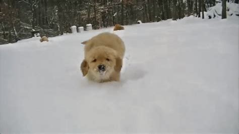 puppy gif nothing better than puppies and snow gif puppy