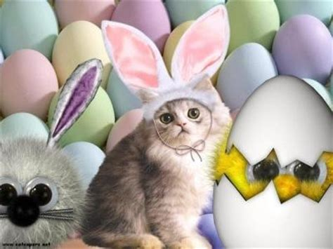 cat easter wallpaper what s new from theme shack