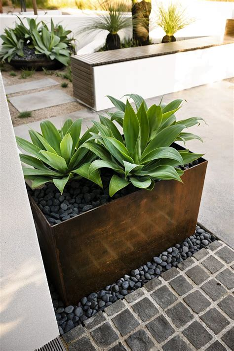 Planter Box Plants Ideas by Webb Brown Neaves Swanbourne Tim Davies Landscaping