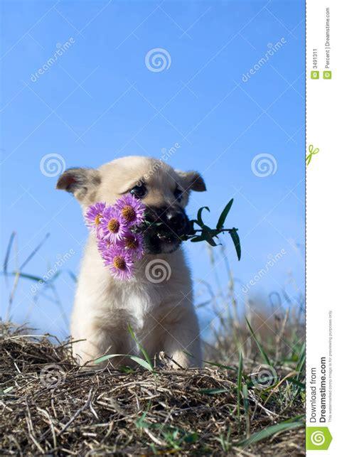 foto fiore bocca di cucciolo con i fiori in bocca immagine stock immagine