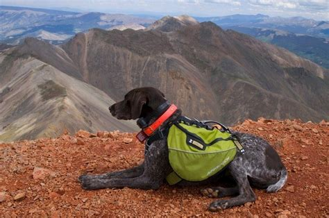 hiking dogs best hiking dogs the best breeds for hikers and active