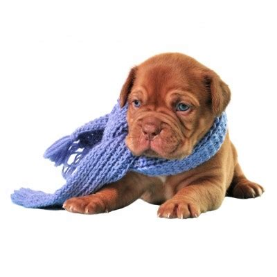 puppy has a cold 10 cold weather care tips for pet owners activebeat