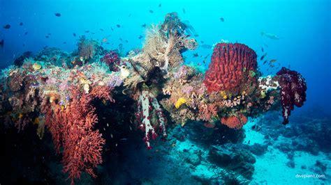 dive raja at diving sardine reef raja at indonesia