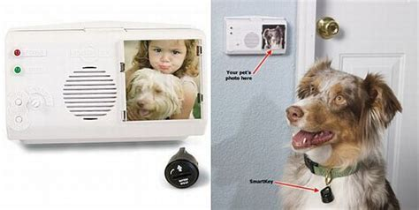 gadgets for pets 10 cool and innovative gadgets for your pets hometone