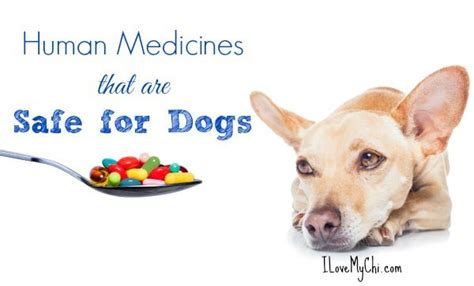 medicine safe for dogs human medicines safe for dogs i my chi