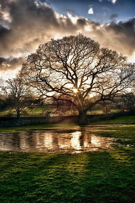 tree photography best 25 landscape photography ideas on