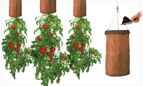 Topsy Turvy Tomato Planter by Green Thumb