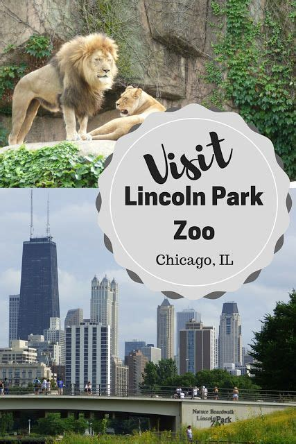 groundhog day lincoln park zoo 1000 images about all things travel on