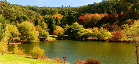 mt lofty botanic garden adelaide autumn and the mount lofty botanic gardens