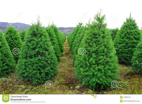 oregon christmas tree farm stock photo image of park