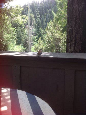 table lemmon valley iron door at mt lemmon ski valley mount lemmon 레스토랑 리뷰