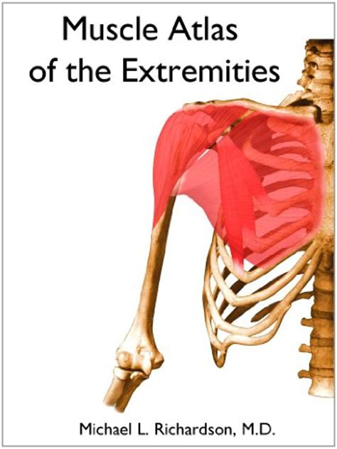 a brief atlas of the human body ebook muscle atlas of the extremities read online