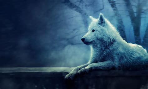 hd wallpapers 1920x1080 wolf white wolf wallpaper full hd dodskypict