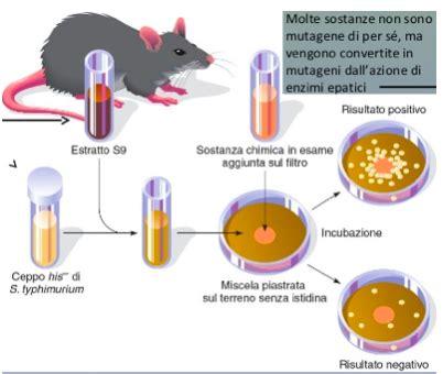 test di griffith theory in evolution mutazioni come si cambia