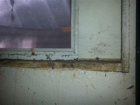 basement window replacement cepagolf 100 basement egress
