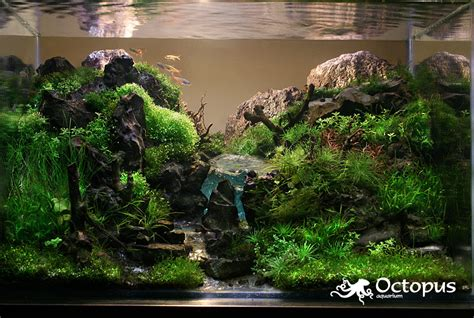 Aquascape Aquarium by Aquascaping Archives Beck Designs