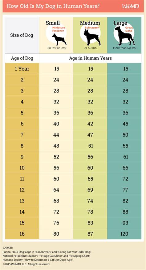 dog age chart   convert  dogs age  human years