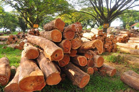 Peraturan Konstruksi Kayu Indonesia kayu mongabay co id