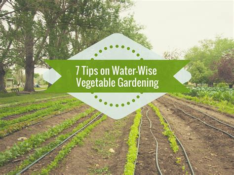 7 Tips For Conserving Water In Your Vegetable Garden The Best Way To Water Vegetable Garden