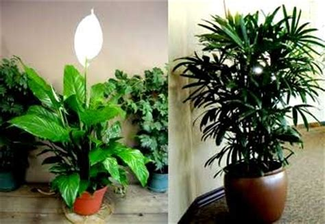 indoor plants dubai garden maintenance uae