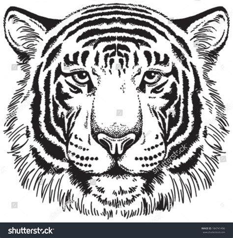 tiger face black white vector sketch stock vector