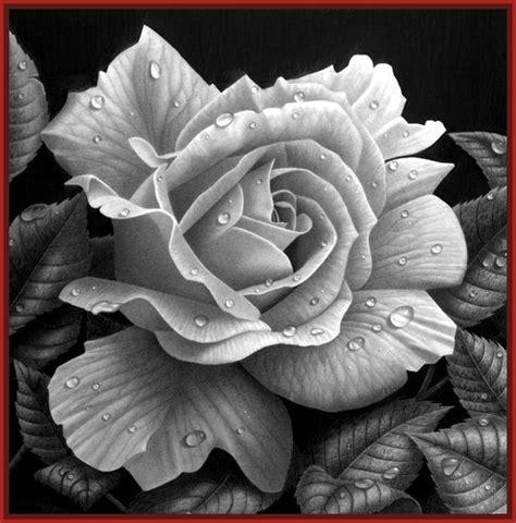 imagenes de flores 3d en uñas ingenioso dibujo a lapiz de una rosa imagenes de rosa