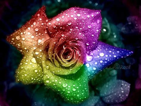 colorful roshes rainbow wallpaper hd desktop 4640 wallpaper