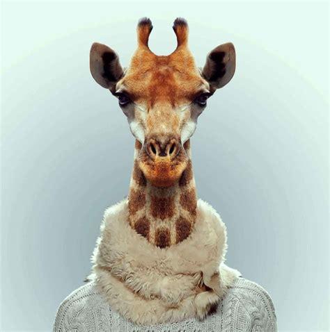 포토갤러리 gt 합성 gt 귀여운동물증명사진