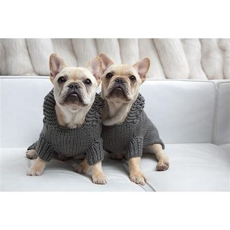 knitting pattern for english bulldog sweater twin french bulldogs in matching isabella cane hoodie knit