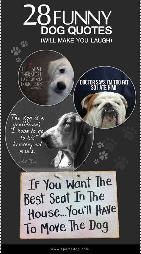 puppy quotes sayings funniest quotes gallery wallpapersin4k net