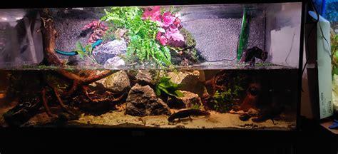 aquascape  paludarium   axolotls