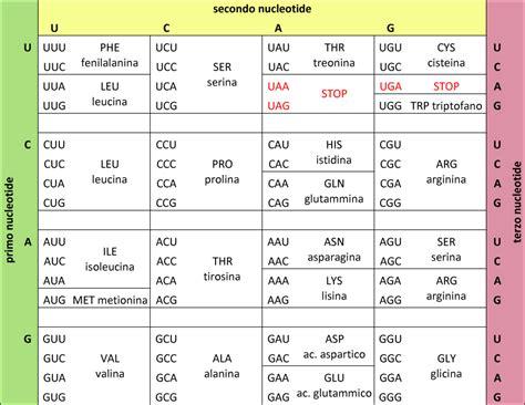 aminoacidi lettere codice genetico