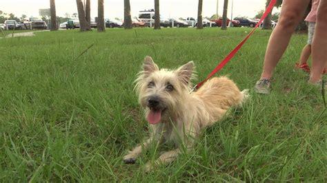 dogs for sale on craigslist finds missing listed for sale on craigslist