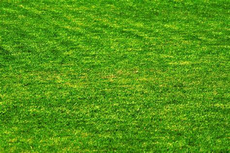 wallpaper background grass grass wallpaper hd hq free download 5438