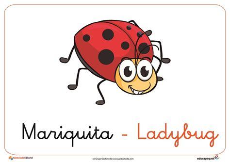 poemas de insectos para ninos ficha de una mariquita con su nombre en ingl 233 s