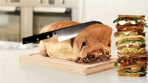 pug bread this pug who is bread photoshopbattles