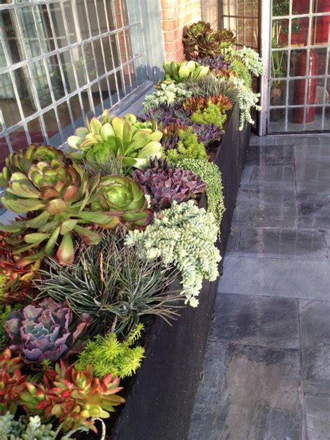 Ideas For Indoor Succulents Design 70 Indoor And Outdoor Succulent Garden Ideas Shelterness