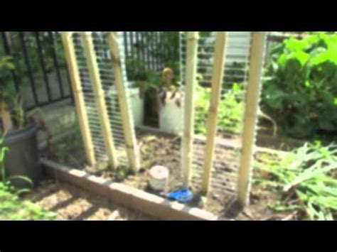 6 foot trellis how to make a 6 foot cucumber vegetable trellis in 15