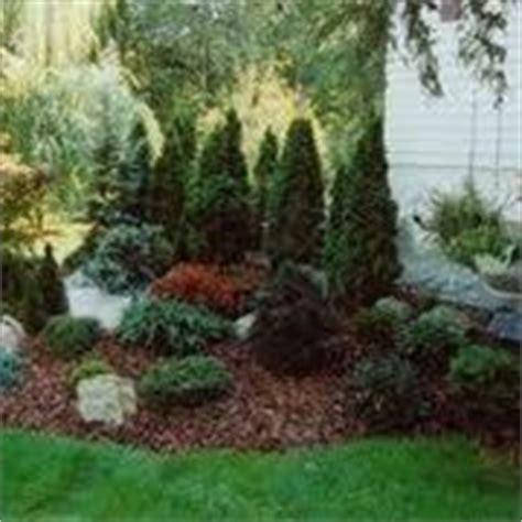 cespugli giardino cespugli sempreverdi piante da giardino
