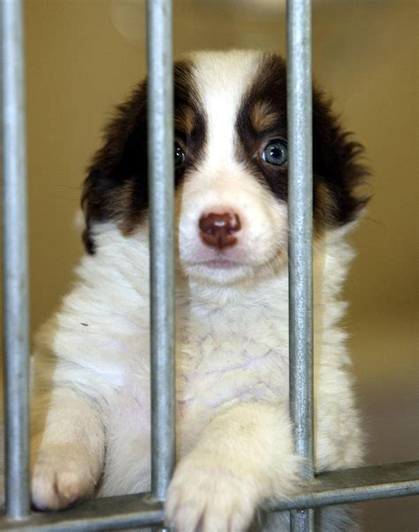 pet stores in pa that sell puppies california to only sell rescue dogs and cats in pet stores