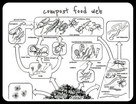 backyard food web 109 best worm unit images on pinterest science ideas
